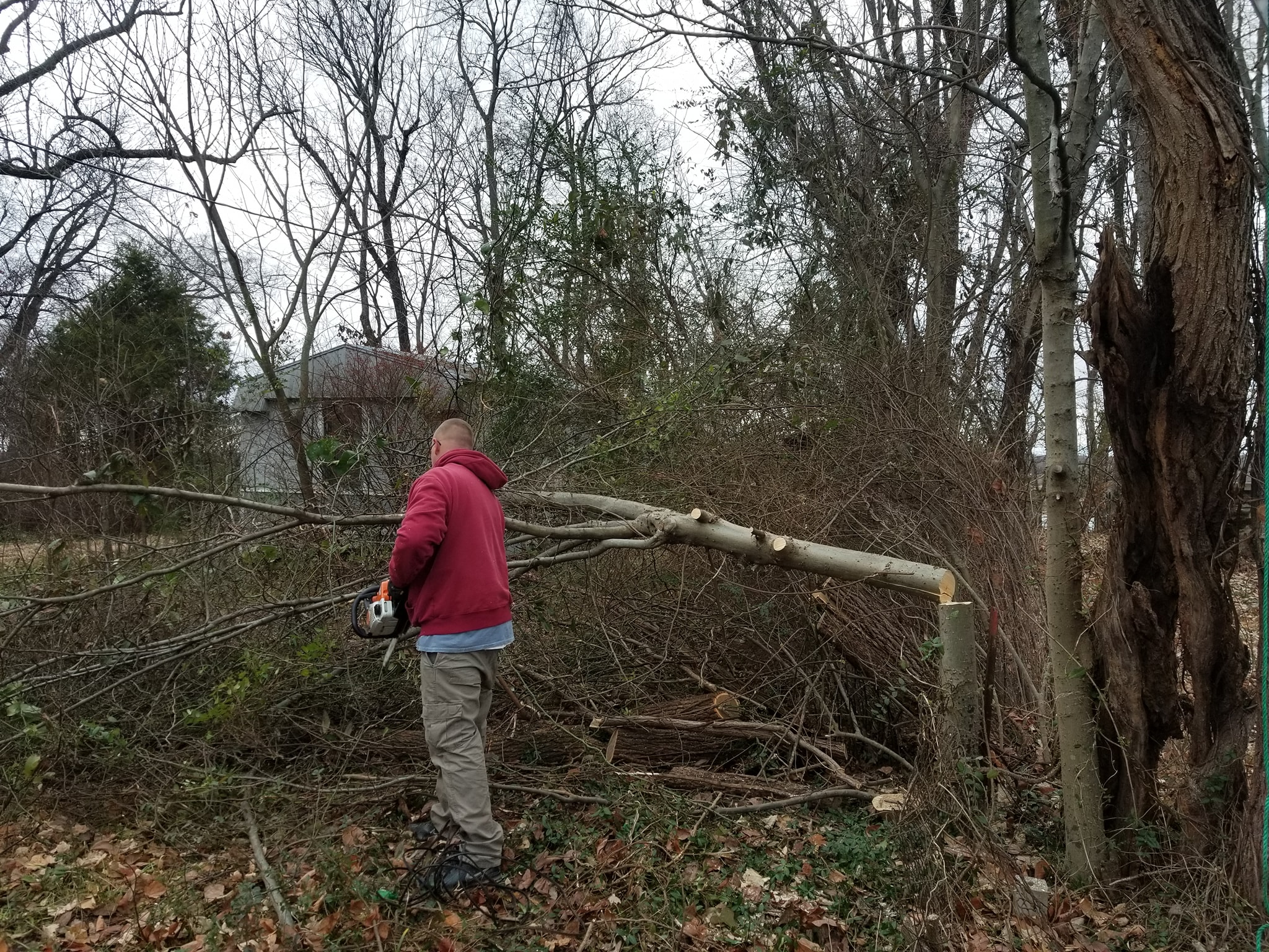 Tree Removal Service Paducah Ky Hicks Landscaping Services